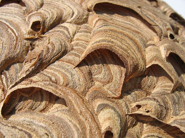 Wasp Nest Wasp Nest Wasp Nature Paper