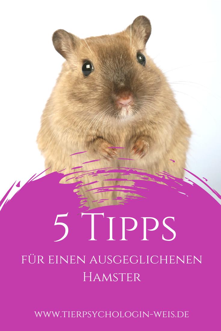 5 Tipps Fur Einen Ausgeglichenen Hamster In 2020 Hamster Tiere Sozialverhalten