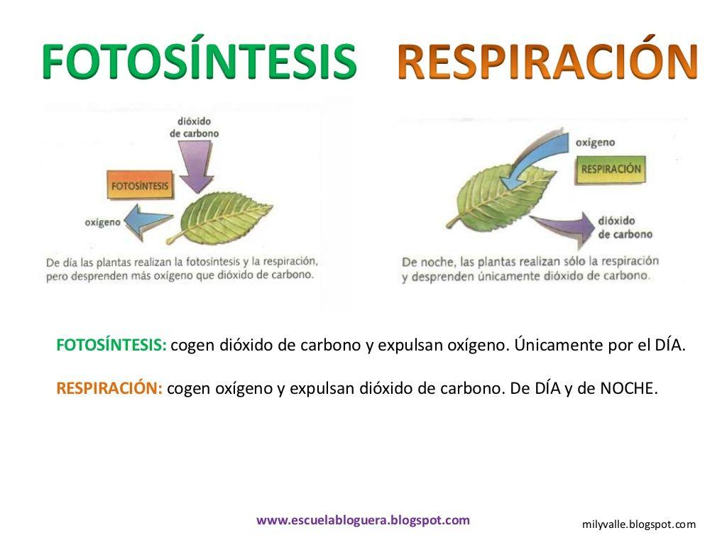 Conocemos las plantas | MEDI-Plantes | Pinterest | Las plantas ...