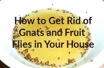 How to Get Rid of Gnats and Fruit Flies- 12 Home Remedies #gnats How to Get Rid of Gnats and Fruit Flies- 12 Home Remedies #gnats How to Get Rid of Gnats and Fruit Flies- 12 Home Remedies #gnats How to Get Rid of Gnats and Fruit Flies- 12 Home Remedies #gnats How to Get Rid of Gnats and Fruit Flies- 12 Home Remedies #gnats How to Get Rid of Gnats and Fruit Flies- 12 Home Remedies #gnats How to Get Rid of Gnats and Fruit Flies- 12 Home Remedies #gnats How to Get Rid of Gnats and Fruit Flies- 12 H #gnats