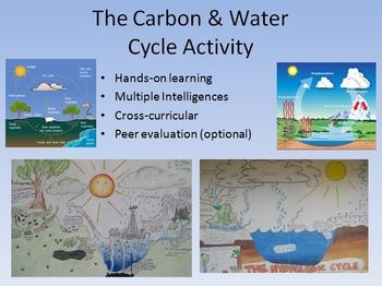 Water And Carbon Cycle Diagram Activity Bring Out Their Creativity Carbon Cycle Earth Space Science Science Activities