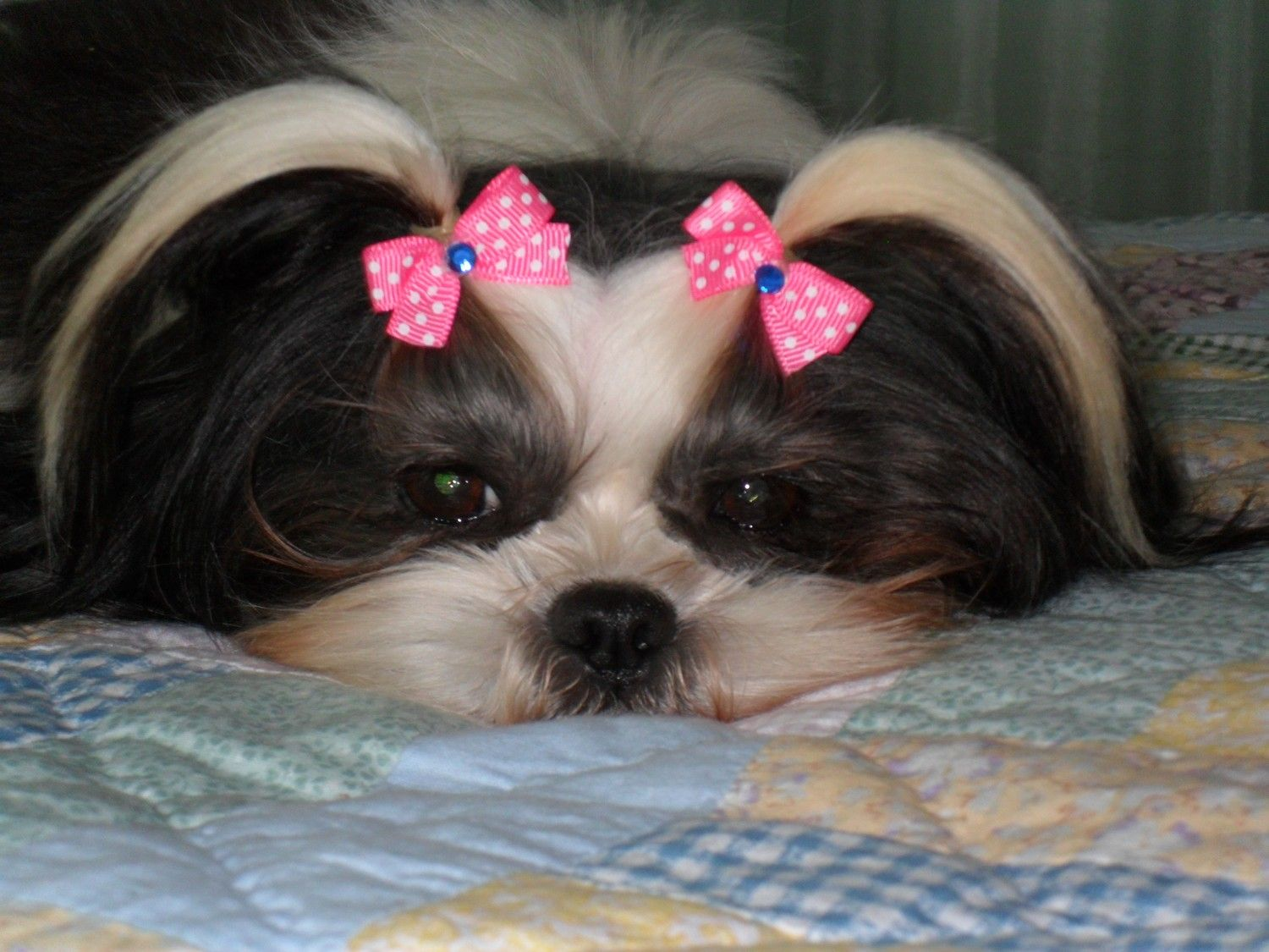 Puppy Dog Bows 20 X Small All Pairs Dog Bows Girl And Dog Puppies And Kitties