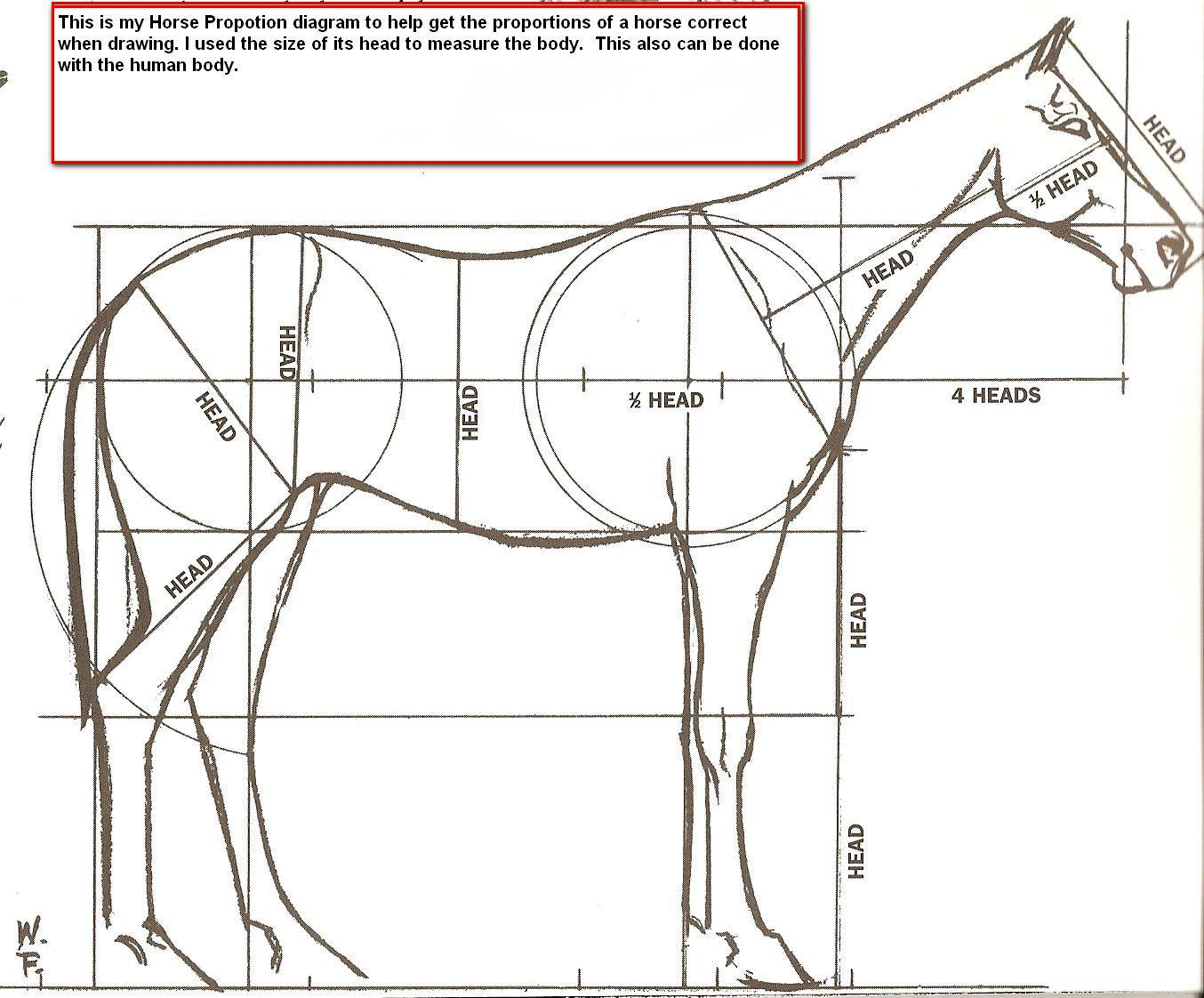 Horse Diagram | Jewelry PC Animals | Pinterest | Caballos, Anatomía ...