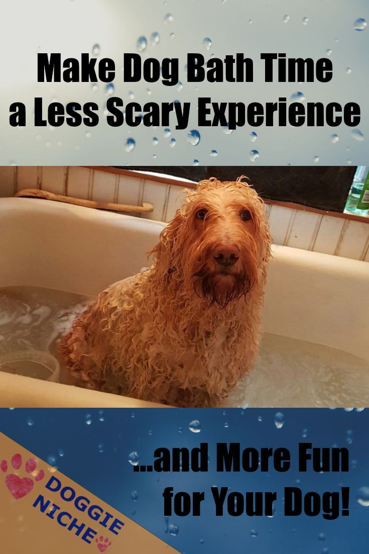 Make Dog Bath Time A Less Scary Experience And More Fun For Your