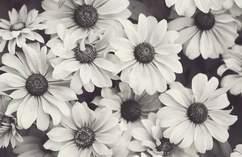 Flores Tumblr Fondo De Pantalla Imagui Wallpaper Pinterest