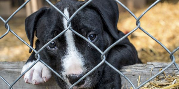 State Rep Bruce Ayers Has Proposed A Bill Banning Puppy Mills In Ma