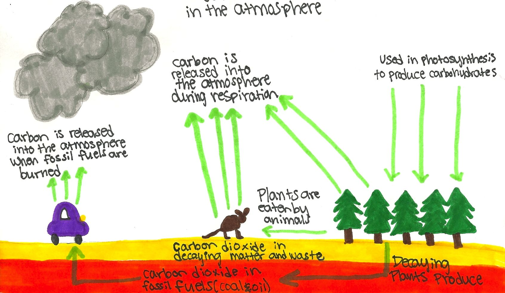 Carbon Cycle For Kids