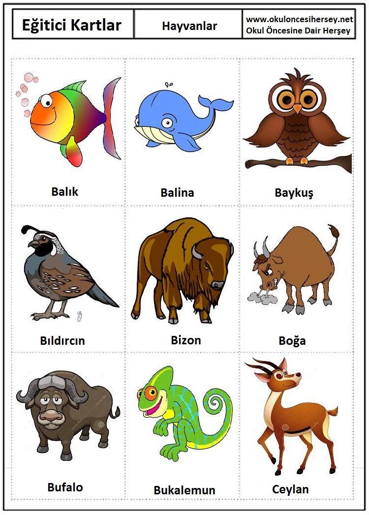 okul-öncesi-eğitici-kartlar-flash-card-Hayvanlar-2.jpg (750×1047 ...