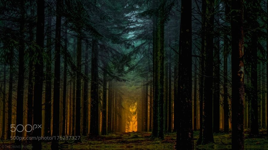 """superbnature: """"sunlight over the forest! by patthom974 http://ift.tt/2dUMiig """""""