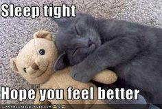 Sleep Tight Hope You Feel Better Good Night Cat Funny Cats Funny Cat Pictures