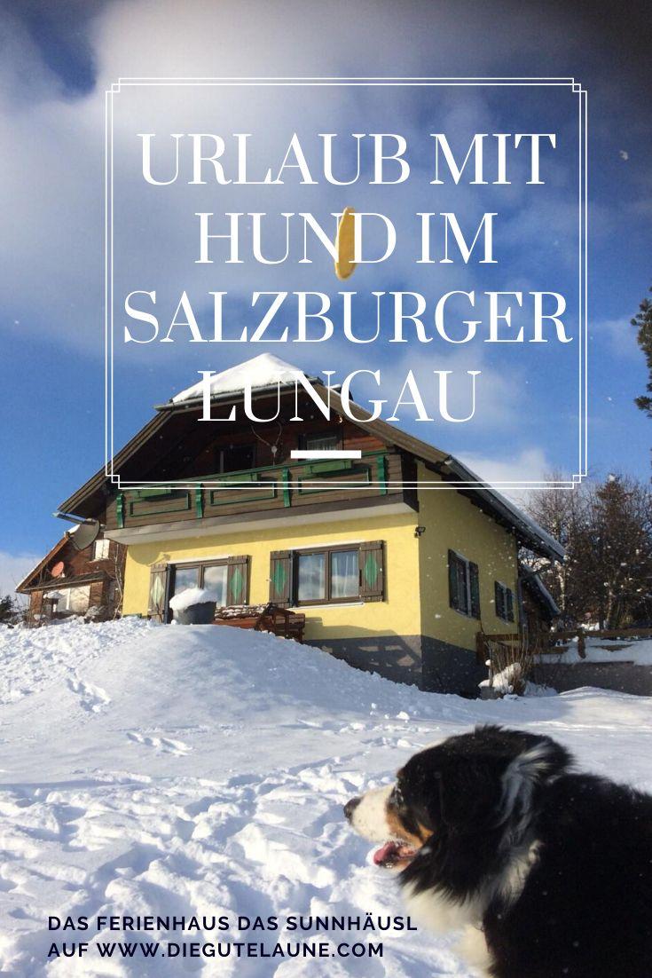 Urlaub mit Hund in Österreich | Ferien, Reisen in europa ...
