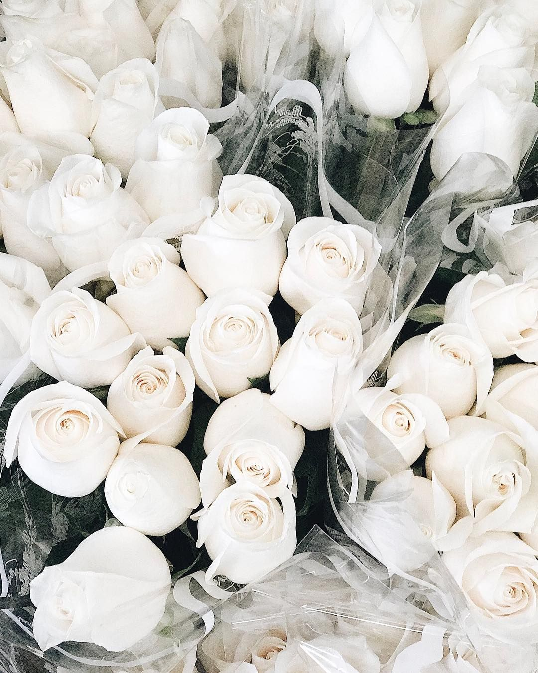 aim jadore pinterest flowers white roses are my favorite aim mightylinksfo