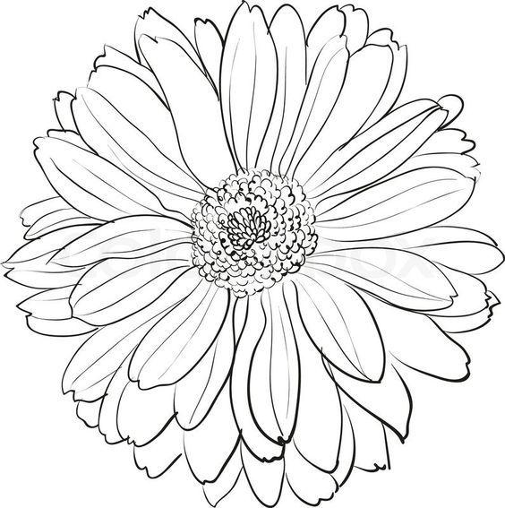 Dibujo De Crisantemo, Noviembre Crisantemo, Flores De Nacimiento ...