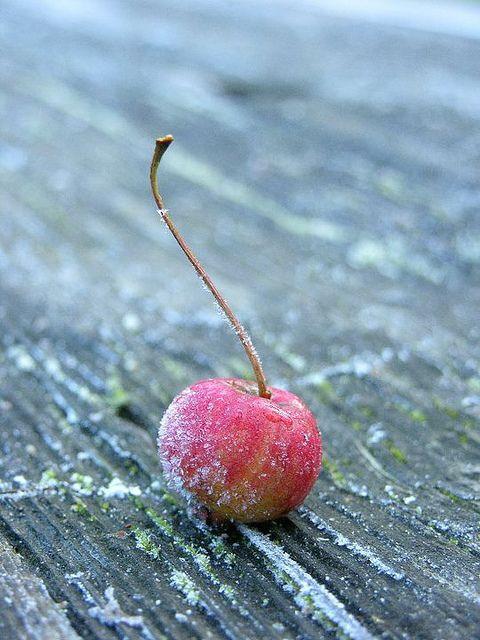 apple frozen by Cintamani ;-), via Flickr