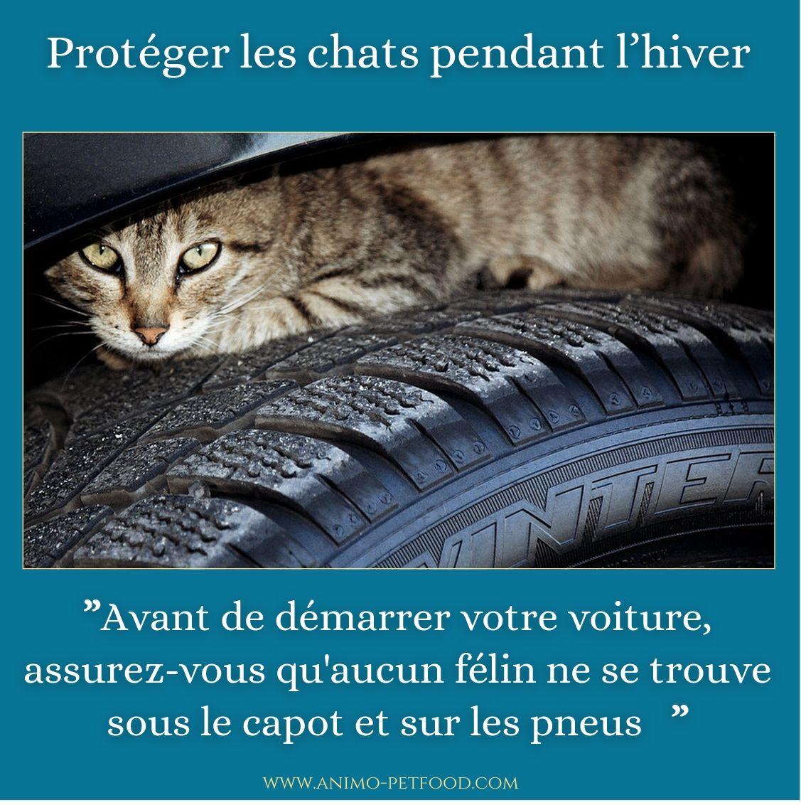 Proteger Les Chats Pendant L Hiver Chien Chat Chat Animaux
