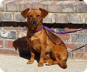 Lathrop Ca Beagle Dachshund Mix Meet Blossom A Dog For