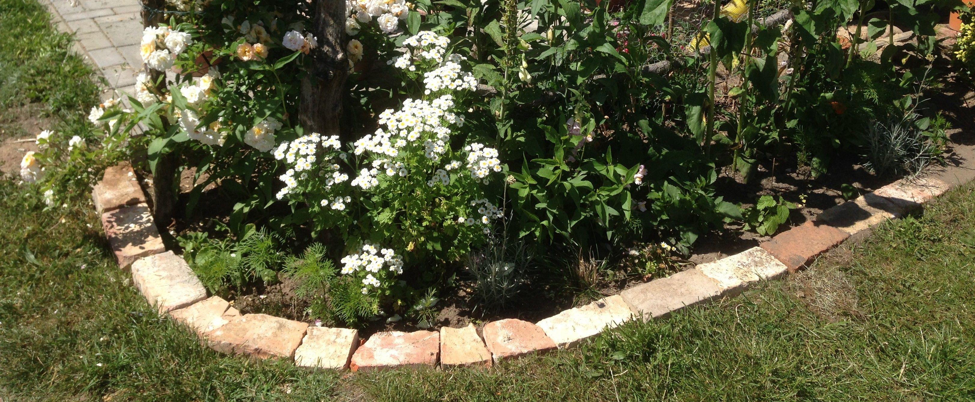 beeteinfassung | garten | pinterest | garden, backyard plan und backyard