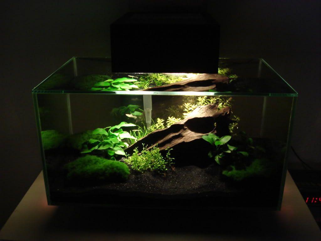 Dukes fluval edge reef zoanthid garden aquascapes for Fish aquarium garden