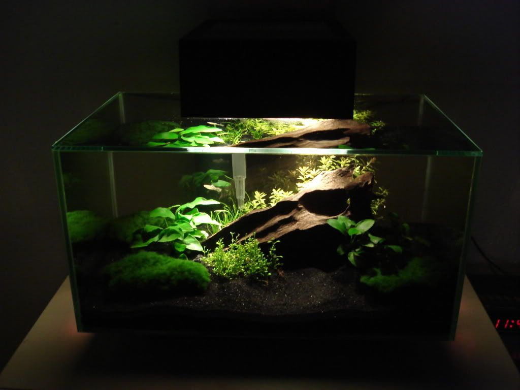 Dukes fluval edge reef zoanthid garden aquascapes for Black sand fish tank