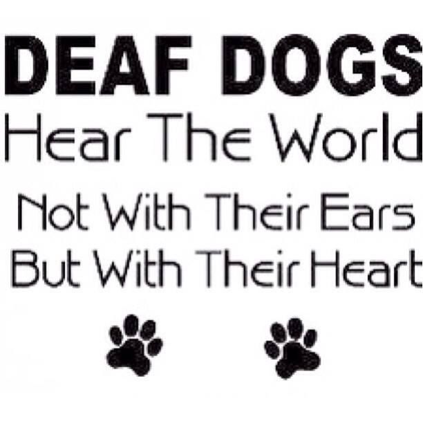 Deaf Dogs Quote Deaf Dog Deaf Dog Training Dog Quotes