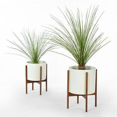 Explore Modern Planters, Indoor Planters, And More!