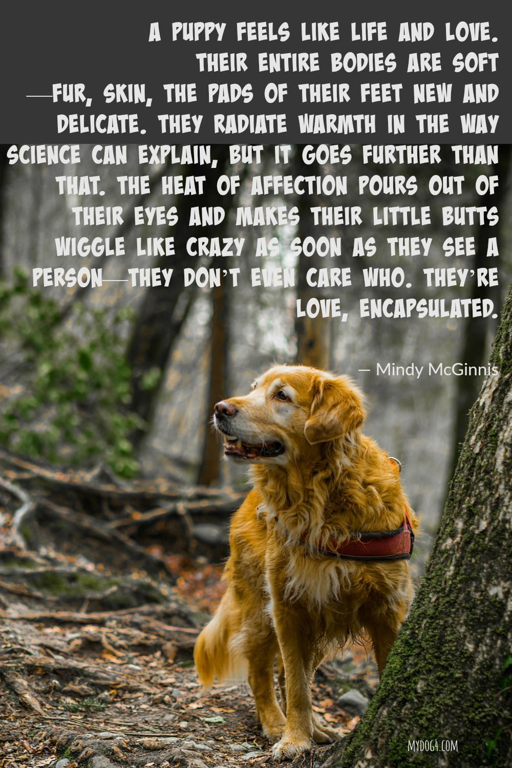 Dog Quotes Puppy Love Dog Puppies Puppy Quotes