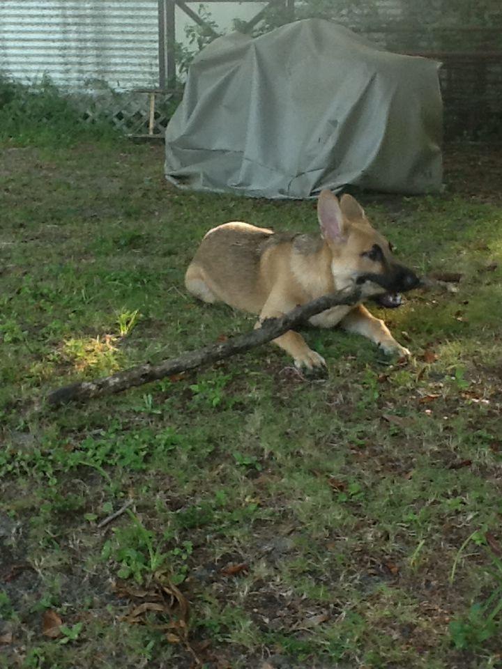Loves sticks