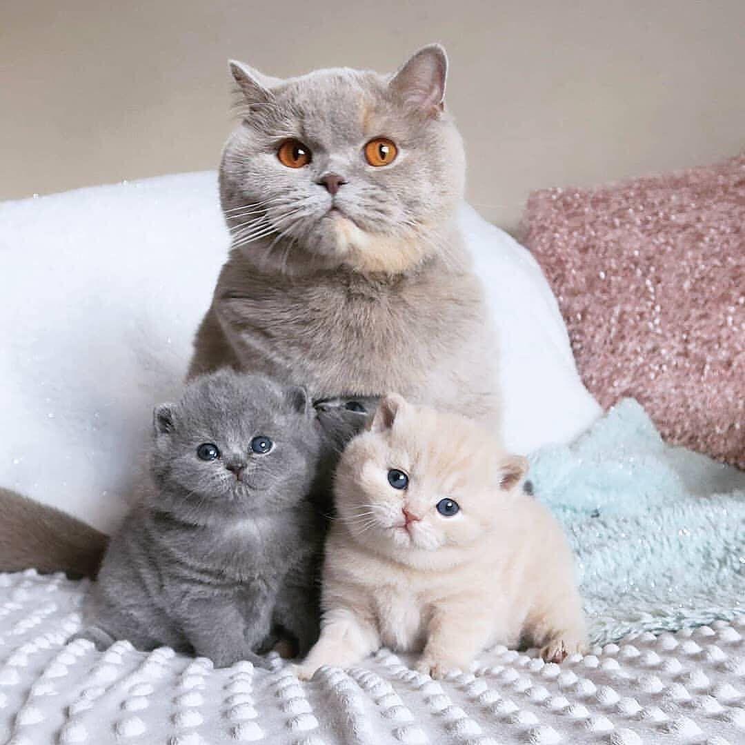 Pet Petlover Petsofig Petscorner Furryfriend Cats Kitten Catlovers Catlover Kitty Meow Catdaily Sleepycats Kittylove Cute Cats Pretty Cats Cats