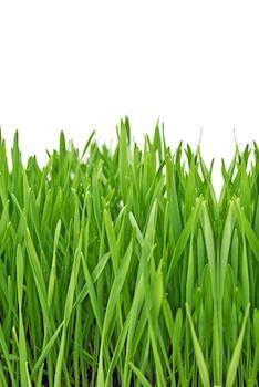 Weizengrassaft - Rohkost Rezept für Entsafter und Saftpresse