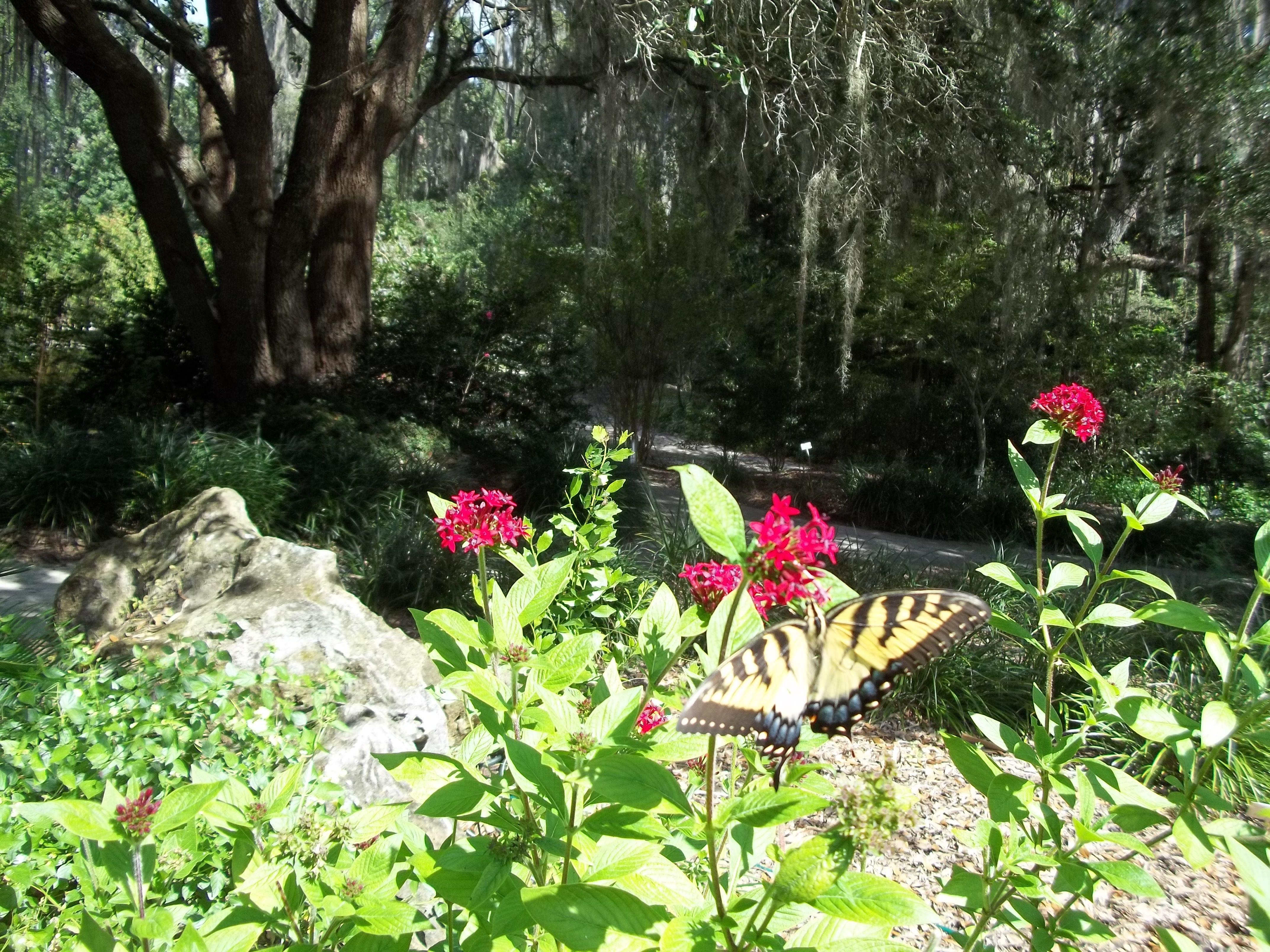 Butterfly At Kanapaha Botanical Gardens Gainesville Florida