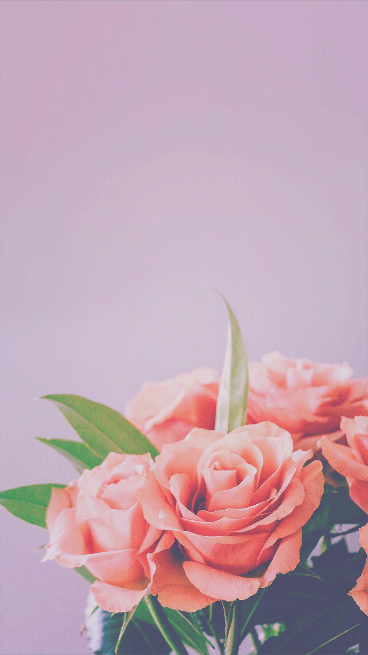 Iphone 6 Plus Iphone 6s Plus Amp Iphone 7 Plus Live Wallpaper Iphone 7 Flower Wallpaper Pink Flowers Wallpaper