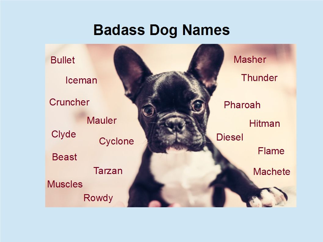 A Name is a Name is a Name   Maybe | Dogs | Dog names, Dogs
