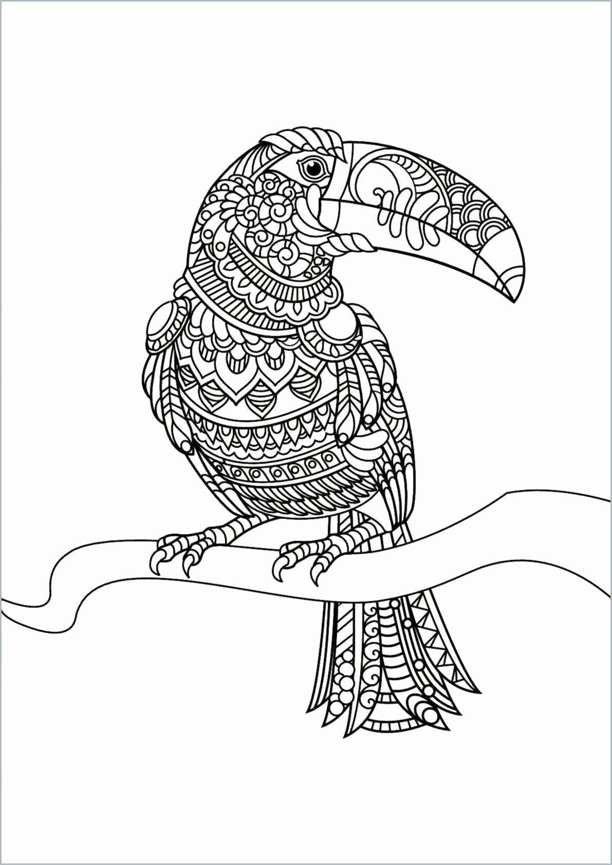 Coloring Animals Eyes New Cute Coloring Sheets In 2020 Bird Coloring Pages Cute Coloring Pages Animal Coloring Pages