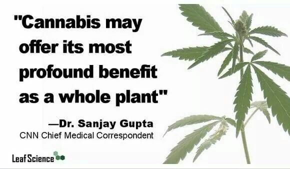 Image result for cannabinoids on a plant quotes