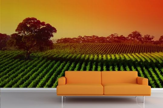 Sunset Vineyard Mural Wallpaper