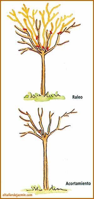 Informe todo sobre la poda de especies rboles rosales for Cuando se podan los arboles frutales