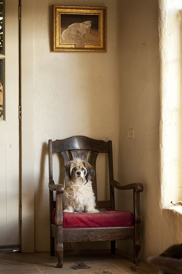 #Beautiful, Life-Affirming Photos of Elderly #Dogs — #Photography