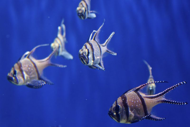How do you make a diy aquarium chiller saltwater