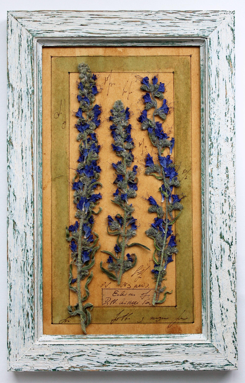Pressed flowers art, Pressed Rustic Herbarium, Original Herbarium ...