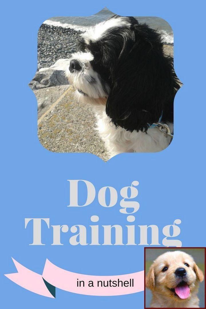 1 Have Dog Behavior Problems Learn About Dog Behavior Training