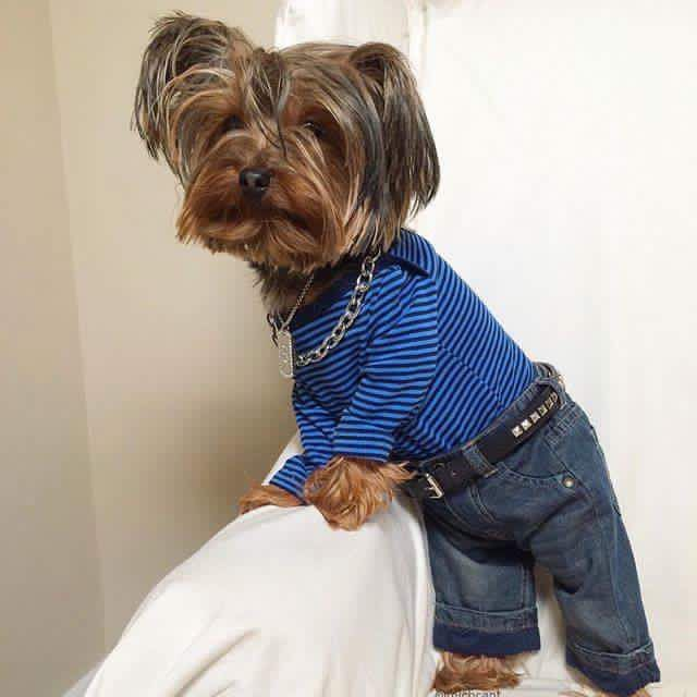 Image result for dogs in blue jeans