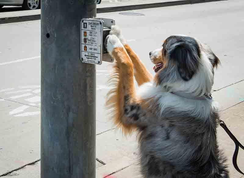 A ShoutOut to All (Legitimate) Service Animals! Rocklin