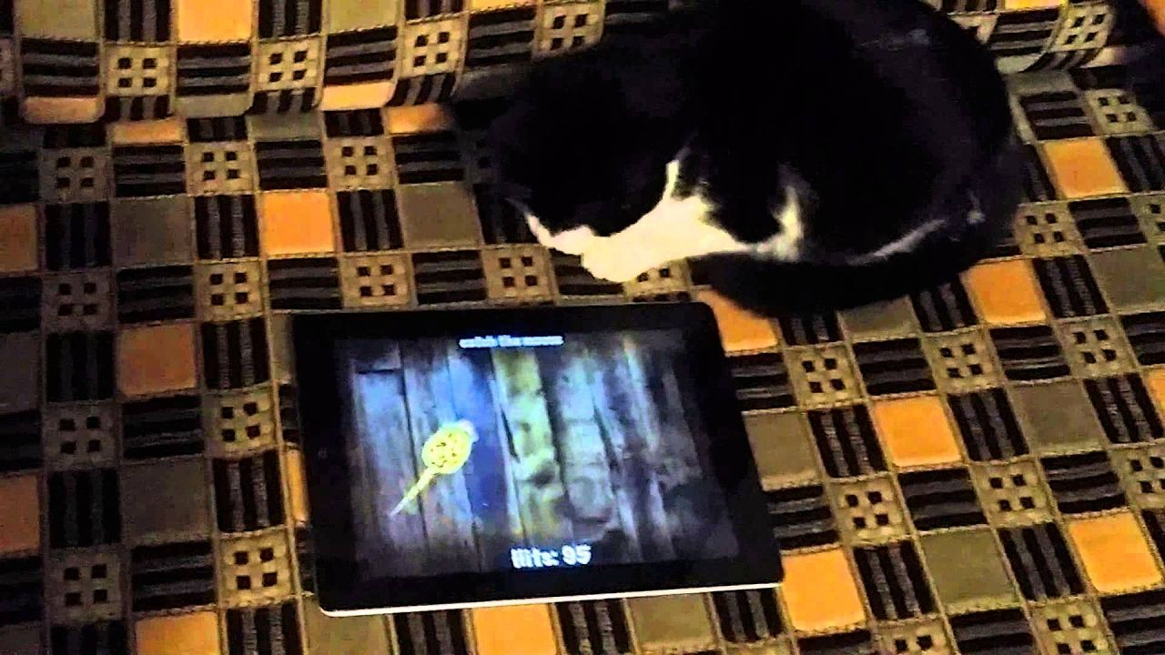 My Kitty Playing With The Ipad 2 Cat Mouse Cat Playing Kitty