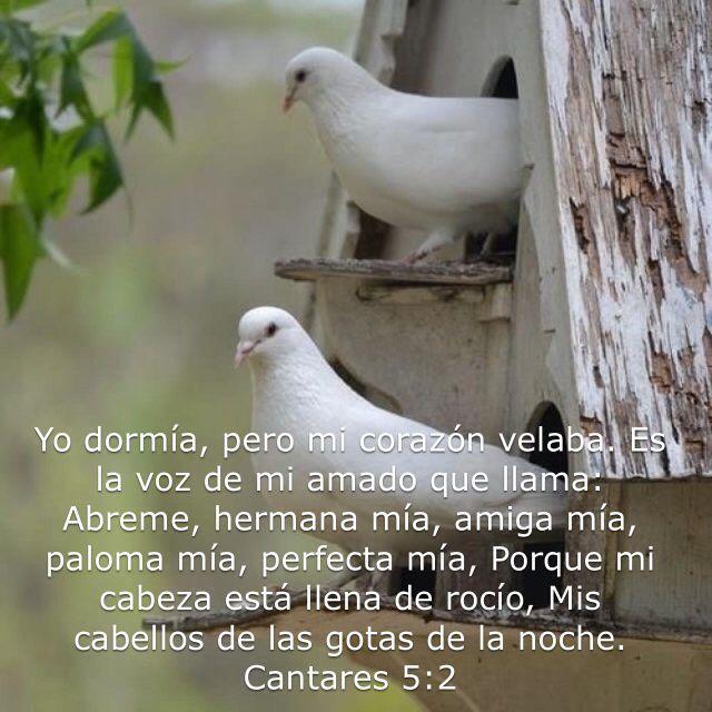 Pin De Mercedes Velez En Versiculos Biblicos La Voz Cantando Perfecta
