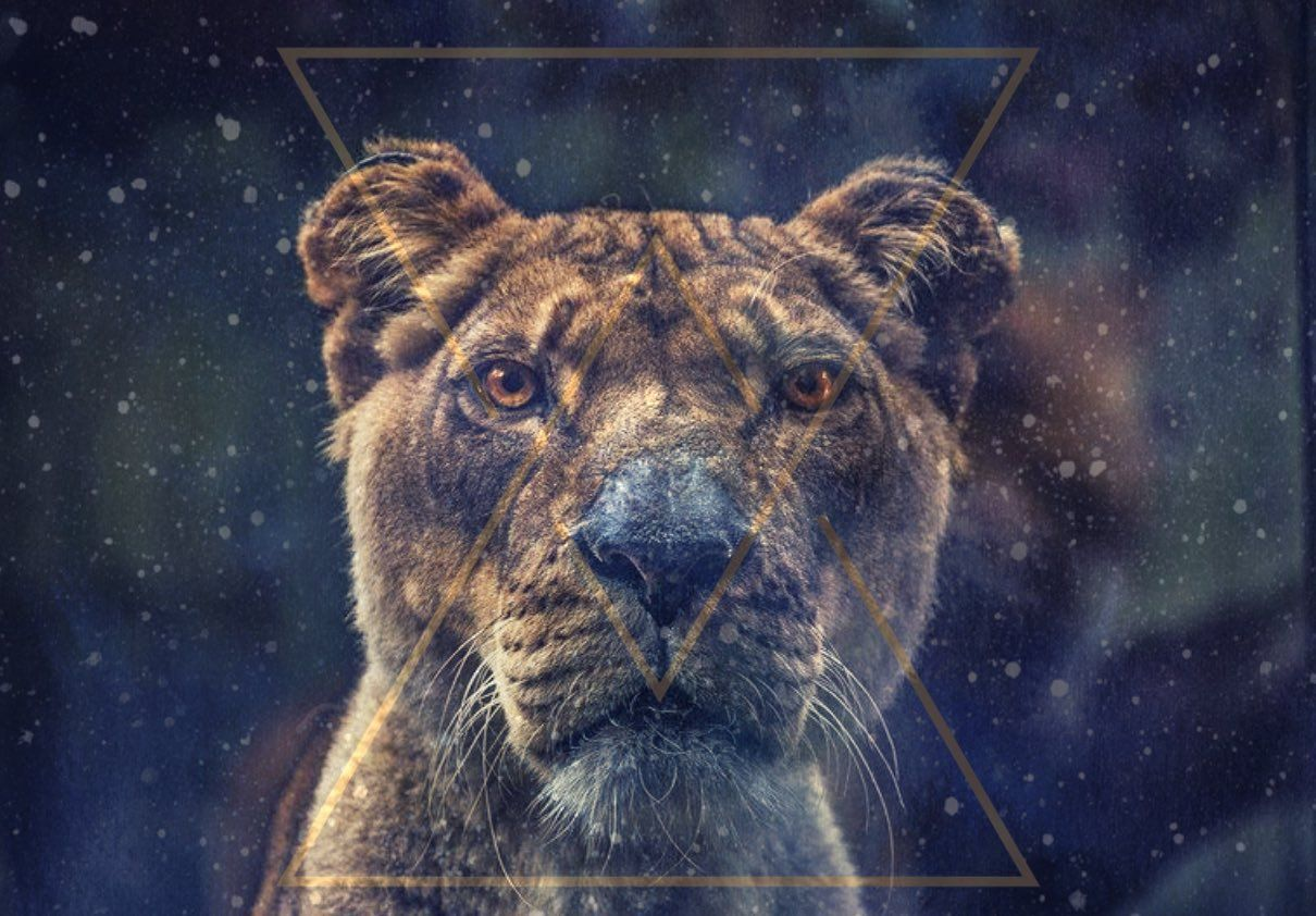Lionsgate portal ritual forever conscious ascension