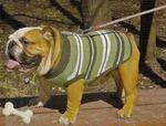 Общие рекомендации по вязанию свитера без рукавов для собаки - Гардероб для наших любимых питомцев (собак, кошек) - Страна Мам