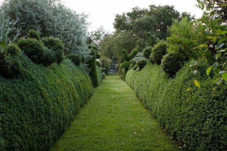 Comment faire une haie de clôture vivante dans son jardin et l ...