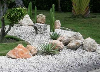 Cactus Info :: How To Build Cactus Garden