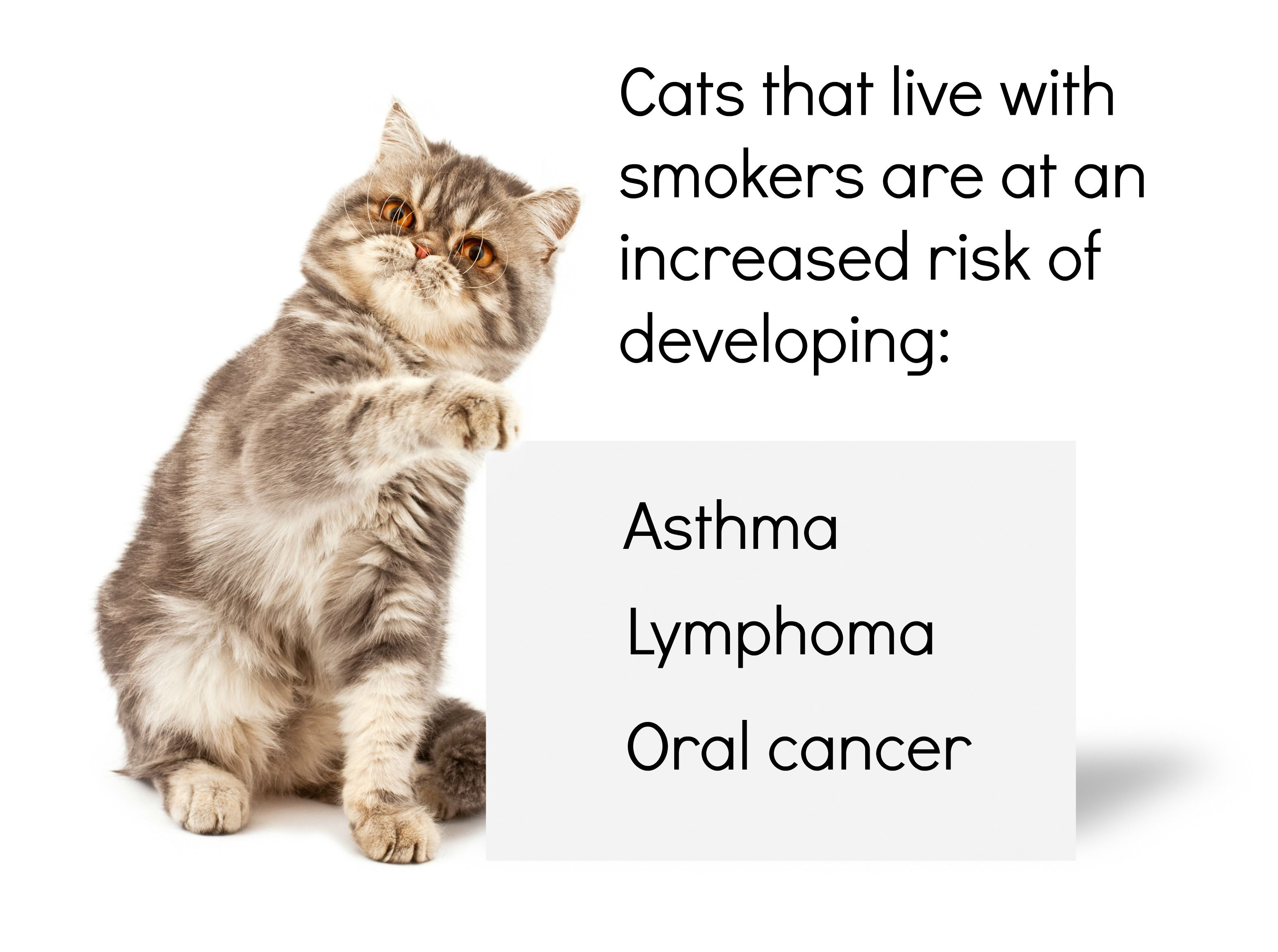 The Dangers Of E Cigarettes To Dogs Petplan Cats Pet Care Tips Pet Care