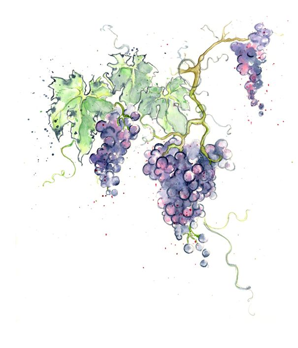 Amy Holliday Illustration New Fruits Red Green Grapes